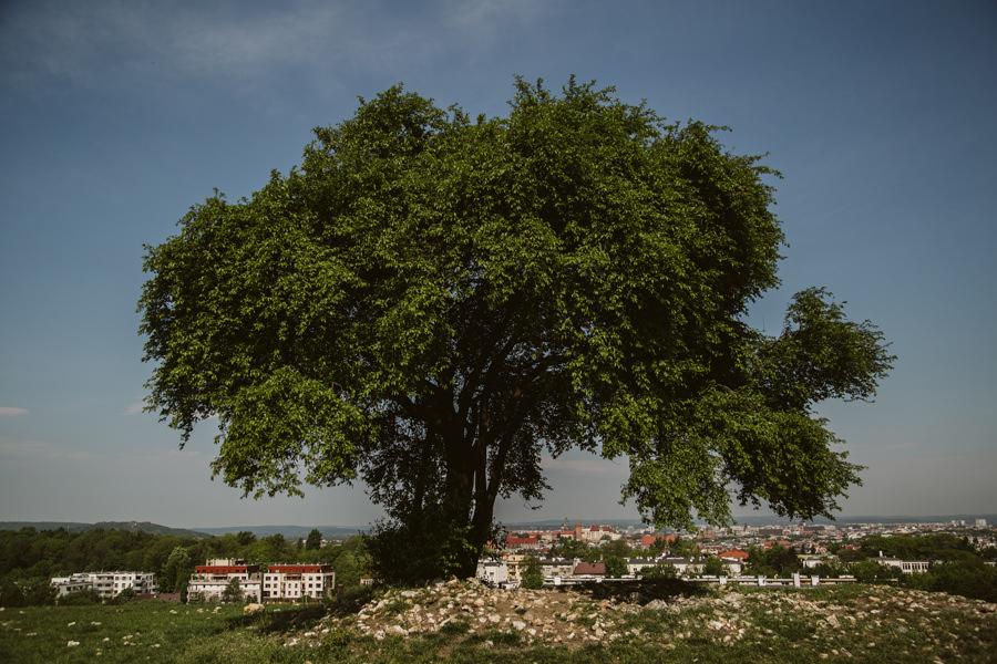 drzewo na kopcu kraka