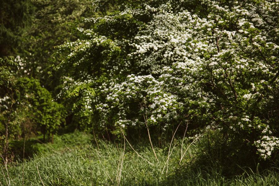 Wiosenna sesja narzeczeńska