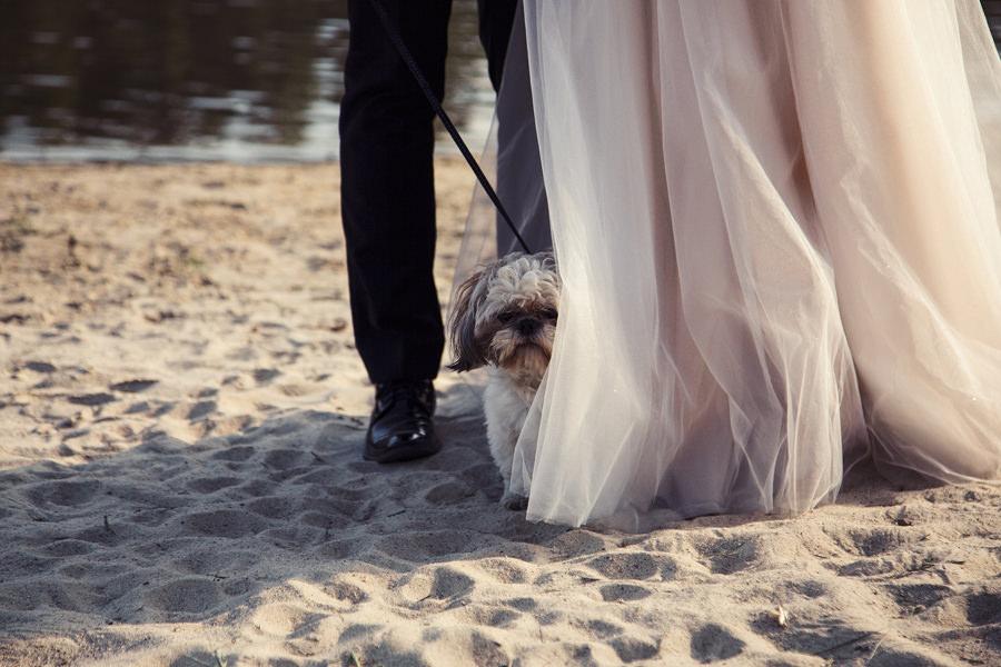 sesja ślubna na śląsku
