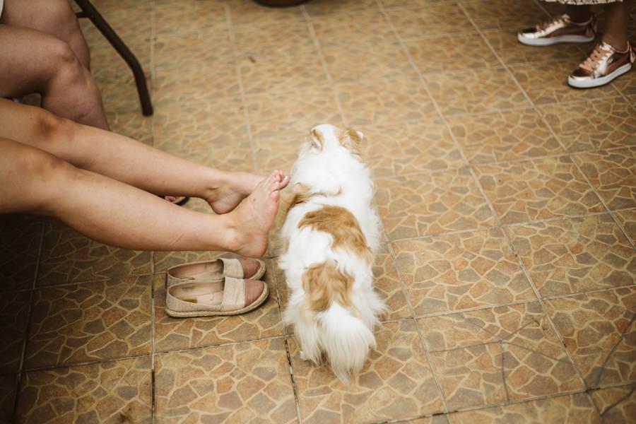 mały pies Bielsko Biała